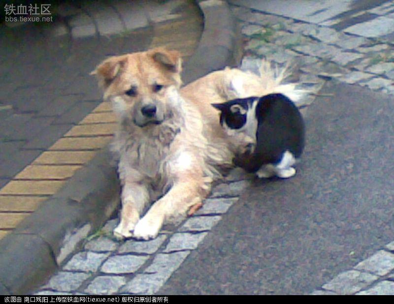 流浪狗和流浪猫在线