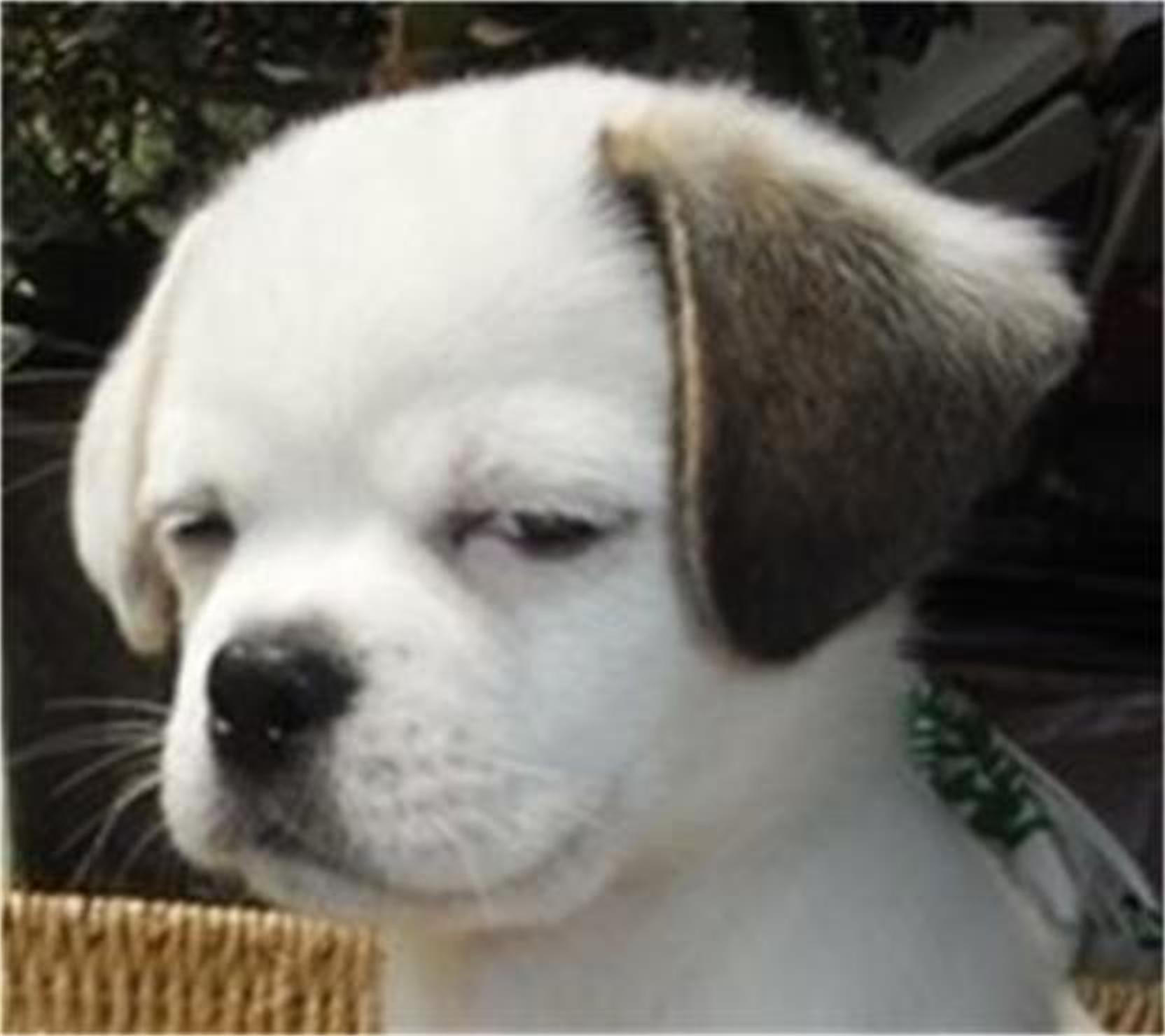 小狗流口水表情包分享展示图片