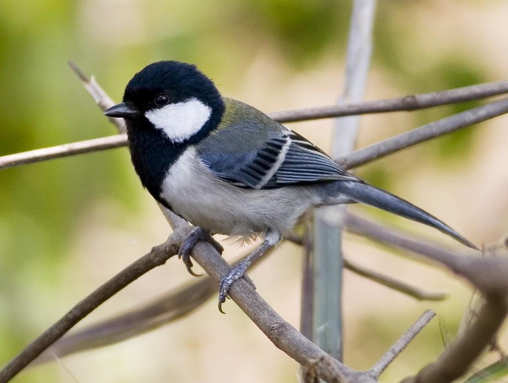 那种鸟叫金丝猴奶糖多少钱一斤图片