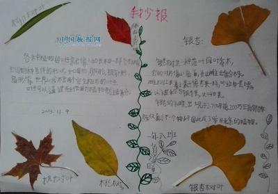 奇妙的树叶手抄报六年级