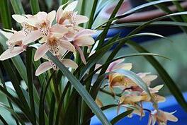 兰花的种类是什么