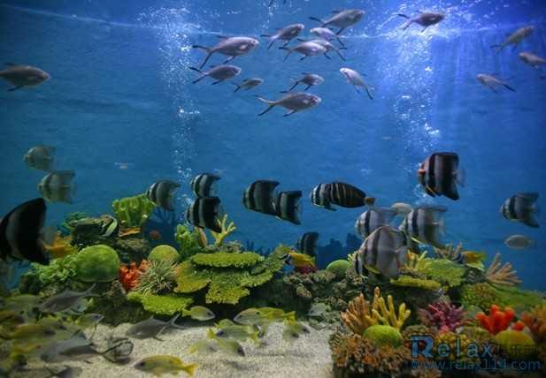 合肥极地海洋世界门票