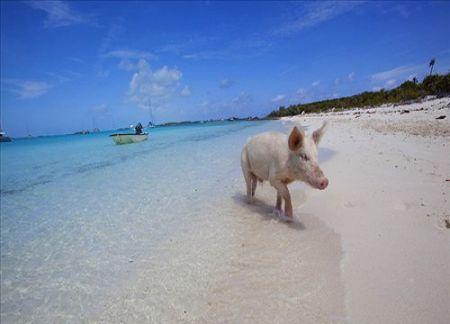 猪看海图片图片