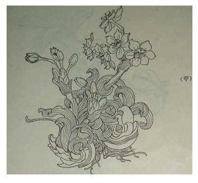 素描画花 素描图片简单一点的 简易画花 素描画图片大全