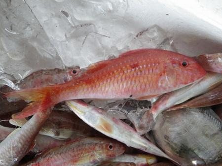 帮忙看一下这鱼是什么品种的海鱼图片