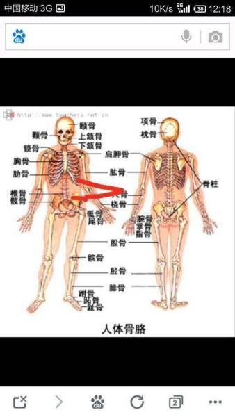 腰部骨骼固)�_胸部基本看的到骨头,我要胸部长肉!腹部减肉,肋骨到腰部那里伸长一点!