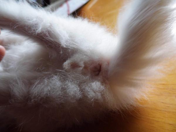 一个月左右大的小猫分辨公母 有图 在线等 还有它两天没有大便怎么办图片