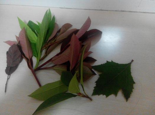 简单的一幅关于秋天的画图片 秋天的一幅简单图画,画秋天的