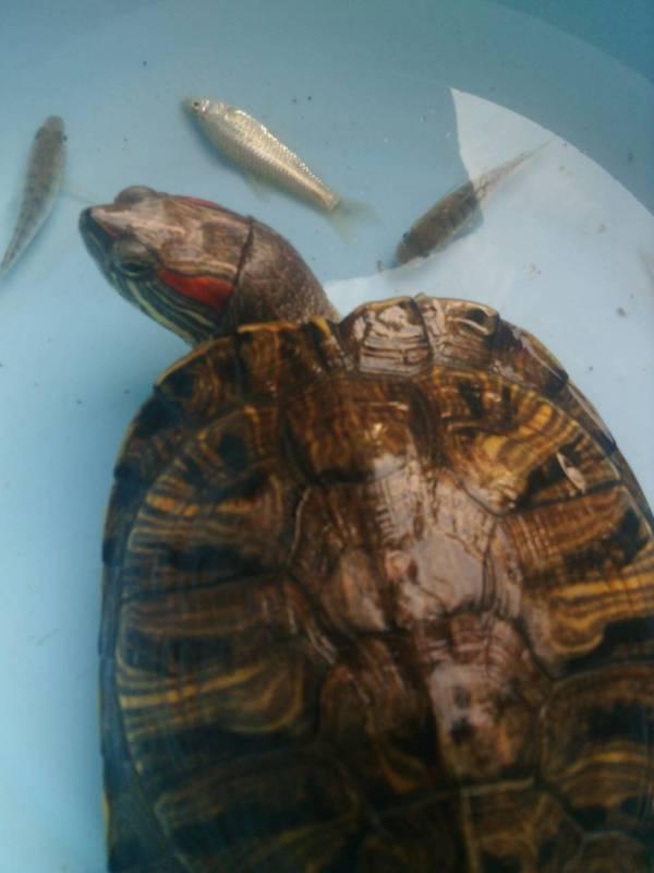 我想知道我的乌龟是什么品种