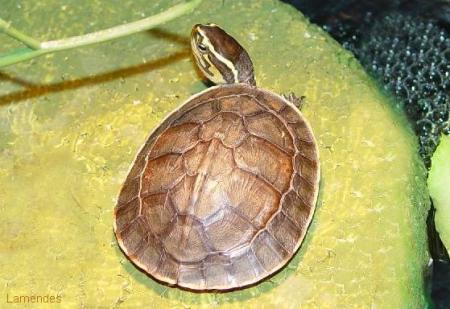 乌龟脱皮和腐皮的区别