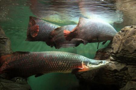怕得鱼惊不应人前一句