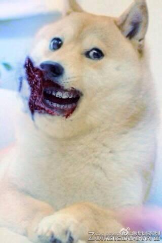 神烦狗表情高清大图分享展示图片